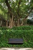 Onbezette bank, wijnstokken en grote & oude bomen Royalty-vrije Stock Foto