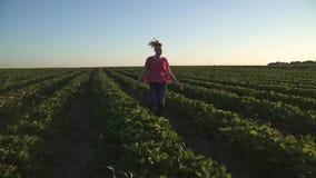 Onbezorgd jong meisje die bij zonsondergang bij aardbeigebied lopen in langzame motie stock videobeelden