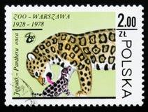 Onca do Panthera de Jaguar, cerca de 1978 Imagem de Stock