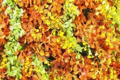 Oncidium Goldiana, оранжевое mokara и зеленая орхидея dendrobium Стоковое Изображение