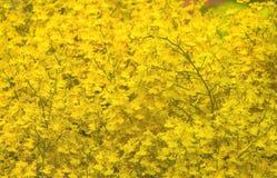 Oncidium orkidé fotografering för bildbyråer