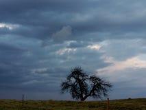 ond tree fotografering för bildbyråer