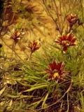 Onda blommor royaltyfria foton