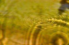 Onda concentrica sulla superficie dell'acqua Fotografia Stock