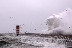 Onda das gaivotas Fotografia de Stock