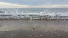 Onda del mare di mattina di estate Immagine Stock