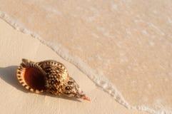 Onda di oceano e del Seashell Immagine Stock Libera da Diritti