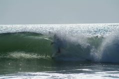 Onda que causa um crash na praia Foto de Stock Royalty Free