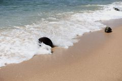 Onda que golpea el coco secado en una playa de la arena foto de archivo