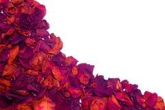 Onda secca dei petali rosa Fotografia Stock