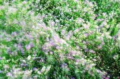 Onda ventosa de flores Foto de archivo libre de regalías