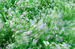 Onda ventosa de flores Imagen de archivo libre de regalías