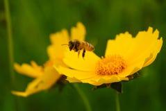 Onda y abeja de oro Imagen de archivo libre de regalías