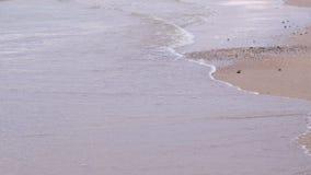 Onda y arena Mar tranquilo Costa del Mar Negro metrajes