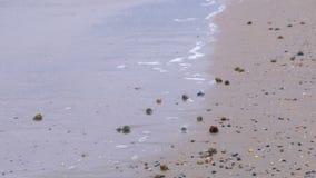 Onda y arena Mar tranquilo Costa del Mar Negro almacen de video