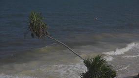 Onda y viento de la palma del mar del Caribe
