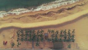 Ondas, areia, praia e palmeiras do mar Opinião aérea do zangão do Seascape video estoque