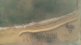 Ondas, arena, playa y palmeras del mar Opinión aérea del abejón del paisaje marino metrajes