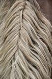 Ondas belamente coiffed do cabelo do cavalo da juba imagem de stock royalty free
