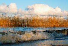 Ondas, cañas y nubes en la puesta del sol en otoño Imagen de archivo