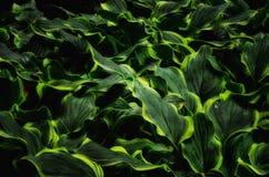 Ondas de cores verdes e amarelas Imagens de Stock Royalty Free