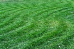 Ondas de la hierba Imagen de archivo libre de regalías
