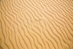 Ondas de Sandy, praia na costa de Ceilão foto de stock royalty free