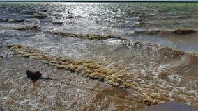 Ondas do lago Imagem de Stock