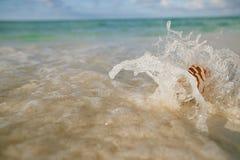 Ondas do mar do shell do nautilus, ação ao vivo Imagens de Stock Royalty Free