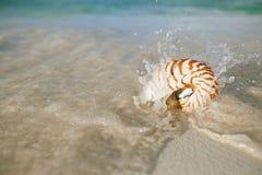 Ondas do mar do shell do nautilus, ação ao vivo Fotografia de Stock