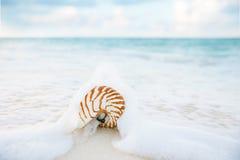 Ondas do mar do shell do nautilus, ação ao vivo Foto de Stock Royalty Free
