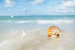 Ondas do mar do shell do nautilus, ação ao vivo Imagem de Stock
