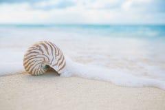 Ondas do mar do shell do nautilus, ação ao vivo Foto de Stock