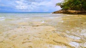 Ondas do recife de corais video estoque