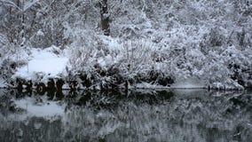 Ondas do rio no dia do frio e de inverno com neve na árvore e ramos no parque natural vídeos de arquivo