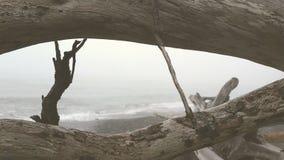 Ondas e madeira lançada à costa Fotografia de Stock Royalty Free
