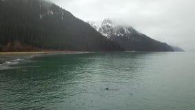 Ondas e marés em Alaska video estoque