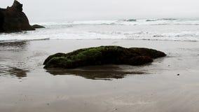 Ondas e rocha de oceano na praia coberta na planta verde vídeos de arquivo