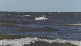 Ondas en el mar Báltico de la orilla almacen de video