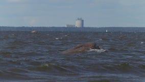 Ondas en el mar Báltico de la orilla almacen de metraje de vídeo