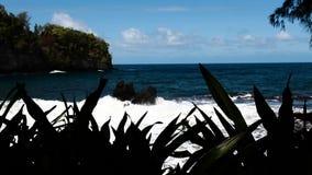 Ondas fora da ilha grande Havaí através da vegetação filme