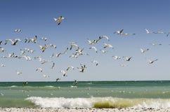 Gaivotas com ondas da praia Imagem de Stock Royalty Free