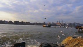 Ondas que espirram gaivotas Hudson River video estoque