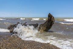 Ondas que se estrellan sobre la madera de deriva en una playa del lago Hurón - Ontario, C Imágenes de archivo libres de regalías