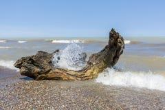 Ondas que se estrellan sobre la madera de deriva en una playa del lago Hurón - Ontario, C Fotos de archivo libres de regalías