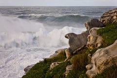 Ondas que se rompen en una línea de la playa rocosa Imagen de archivo