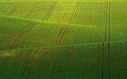 Ondas verdes Imagens de Stock Royalty Free