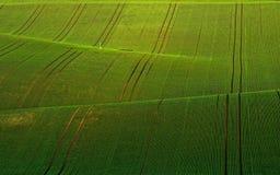 Ondas verdes del invierno Imágenes de archivo libres de regalías