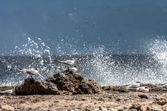 Ondas y golondrinas de mar de la costa del norte de Playa Canoa Imagen de archivo libre de regalías