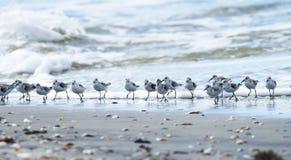 Ondas y muchas aves costeras Fotografía de archivo libre de regalías